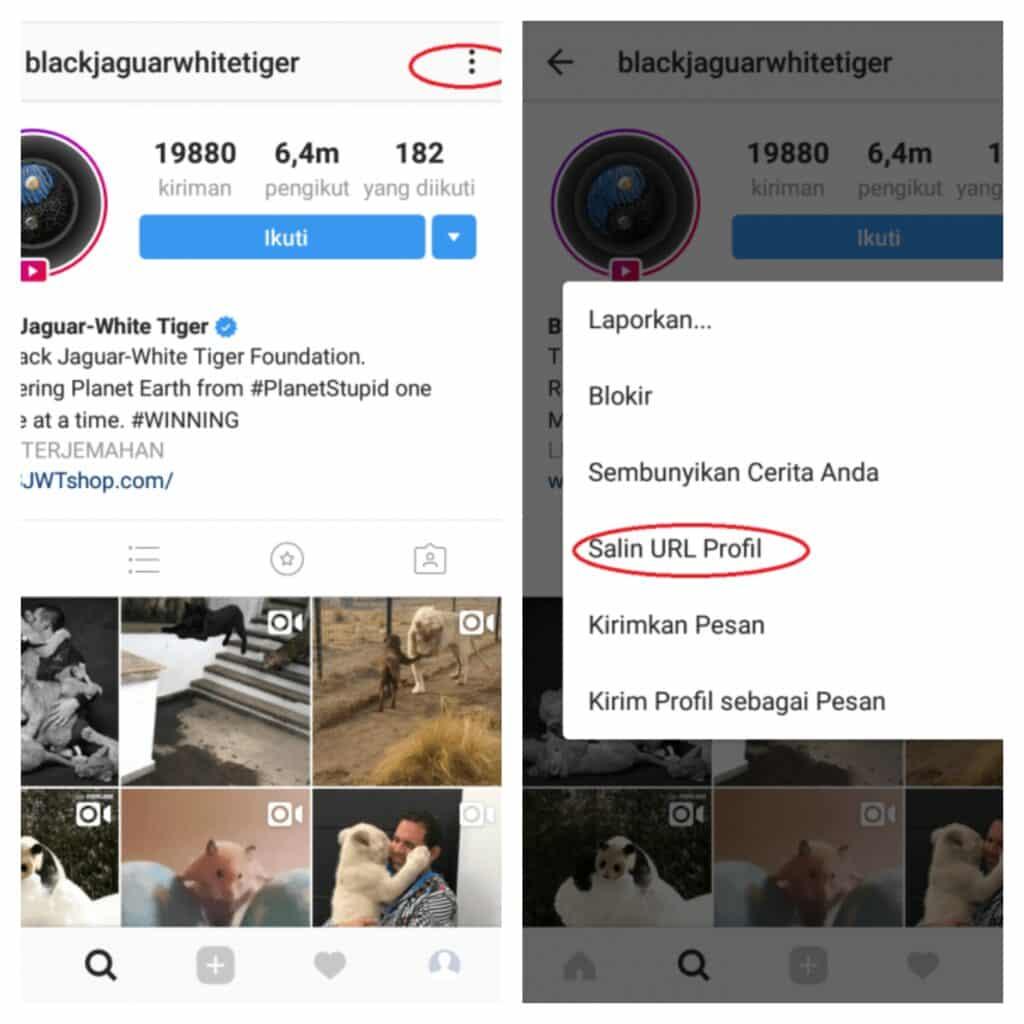 cara copy link instagram orang lain